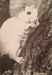White Squirrels of Brevard by Paul L. Brink